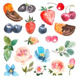 Σύνολο μούρων watercolor, κεράσι, φράουλα, πορτοκάλι στη σοκολάτα, φύλλα της μέντας και του eucaliptus στοιχεία τέσσερα σχεδίου α ελεύθερη απεικόνιση δικαιώματος