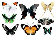 Σύνολο πεταλούδας οκτώ στο άσπρο υπόβαθρο με το ψαλίδισμα της πορείας διανυσματική απεικόνιση
