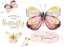 Σύνολο πεταλούδας boho watercolor Εκλεκτής ποιότητας απομονωμένη καλοκαίρι τέχνη άνοιξης Απεικόνιση Watercolour γαμήλια κάρτα σχε διανυσματική απεικόνιση