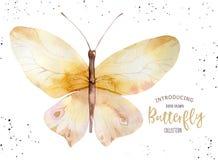 Σύνολο πεταλούδας boho watercolor Εκλεκτής ποιότητας απομονωμένη καλοκαίρι τέχνη άνοιξης Απεικόνιση Watercolour γαμήλια κάρτα σχε Στοκ φωτογραφία με δικαίωμα ελεύθερης χρήσης