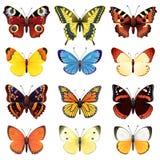 σύνολο πεταλούδων Στοκ Εικόνες