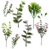 Σύνολο πράσινων γίνοντων κλάδων και λουλουδιών που απομονώνονται στο άσπρο υπόβαθρο για το γραφικό σχέδιο στοκ φωτογραφία με δικαίωμα ελεύθερης χρήσης