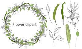 Σύνολο πράσινων floral σχεδίων, διακοσμήσεις Διανυσματικό στεφάνι των πράσινων φύλλων και των λουλουδιών περιγράμματος για τη δια στοκ εικόνες