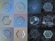 Σύνολο 12 πραγματικών snowflake φωτογραφιών Στοκ φωτογραφία με δικαίωμα ελεύθερης χρήσης
