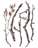 Σύνολο ραβδιών και κλαδίσκων με τα φύλλα Στοκ Φωτογραφίες