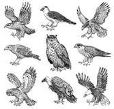 Σύνολο ρεαλιστικών πουλιών Γεράκι, γύπας Griffon, χλωμός επιδρομέας, μαύρος ικτίνος, κουκουβάγια και αετός Συρμένο χέρι διανυσματ ελεύθερη απεικόνιση δικαιώματος
