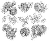 Σύνολο ρεαλιστικών συρμένων χέρι τριαντάφυλλων ελεύθερη απεικόνιση δικαιώματος