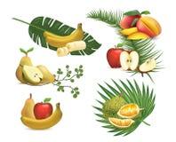 Σύνολο ρεαλιστικών φρούτων, απεικόνιση του τροπικού φυλλώματος στοκ εικόνα