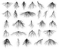 Σύνολο ριζών δέντρων στοκ φωτογραφίες
