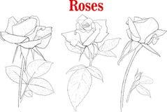 Σύνολο ροδαλών λουλουδιών Στοκ Εικόνες