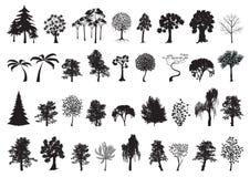 Σύνολο σκιαγραφιών δέντρων Στοκ Εικόνα