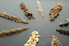 Σύνολο συλλογής σιταριών δημητριακών και σωρών σπόρων: ρεβέντι, μαρούλι, τεύτλα, σπανάκι, κρεμμύδι, άνηθος, πεπόνι, καρότο, μάραθ στοκ φωτογραφία