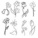 Σύνολο σχεδίου λουλουδιών Στοκ Εικόνα
