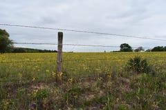 Σύνολο τομέων των κίτρινων λουλουδιών στο ανατολικό Τέξας στοκ εικόνα