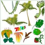 Σύνολο: Τροπικά λουλούδια δέντρων ζουγκλών Διανυσματική απεικόνιση