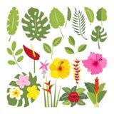 Σύνολο τροπικών λουλουδιών και φύλλων Στοκ Φωτογραφίες