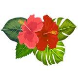 Σύνολο τροπικών στοιχείων λουλουδιών Συλλογή hibiscus των λουλουδιών σε ένα άσπρο υπόβαθρο Διανυσματική δέσμη απεικόνισης διανυσματική απεικόνιση