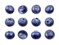 Σύνολο φρέσκων βακκινίων που απομονώνεται στο άσπρο υπόβαθρο στοκ εικόνες