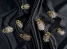 Σύνολο φτερού της Τουρκίας φασιανών στο μαύρο υπόβαθρο μεταξιού Στοκ Φωτογραφία
