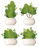Σύνολο φυσικών δέντρων των Μπους και κήπων στο άσπρο βάζο για το εξοχικό σπίτι πάρκων και τη διανυσματική απεικόνιση ναυπηγείων π Στοκ Εικόνες