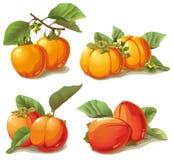 Σύνολο ώριμο persimmon διανυσματική απεικόνιση