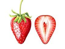 Σύνολο ώριμων φραουλών watercolor που απομονώνεται στο άσπρο υπόβαθρο στοκ εικόνα