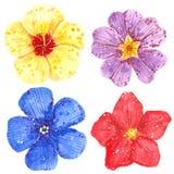 Σύνολο Clipart ζωηρόχρωμα λουλουδιών, Hibiscus, Clematis, μαργαρίτας και Primrose ελεύθερη απεικόνιση δικαιώματος