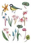 Σύνολο floral στοιχείων watercolor με το πουλί απεικόνιση αποθεμάτων
