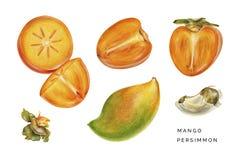 Σύνολο persimmon και μάγκο στοκ εικόνα με δικαίωμα ελεύθερης χρήσης