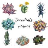 Σύνολο succulents watercolor graphics Απομονωμένη διανυσματική απεικόνιση αντικειμένων ελεύθερη απεικόνιση δικαιώματος