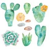 Σύνολο Watercolor κάκτων, succulents, χαλίκια ελεύθερη απεικόνιση δικαιώματος