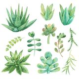 Σύνολο Watercolor κάκτων, succulents, χαλίκια απεικόνιση αποθεμάτων