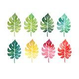 Σύνολο Watercolor φύλλων δέντρων Στοκ εικόνες με δικαίωμα ελεύθερης χρήσης