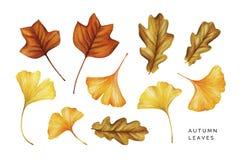 Σύνολο Watercolor φύλλων φθινοπώρου Φύλλα δέντρων, βαλανιδιών και ginkgo τουλιπών στοκ φωτογραφίες
