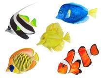 Σύνολο watercolor ψαριών θάλασσας ελεύθερη απεικόνιση δικαιώματος