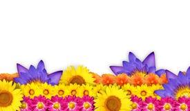 Σύνορα ή πλαίσιο λουλουδιών με τις όμορφες ανθίσεις Στοκ Εικόνες