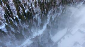 Σύνορα μεταξύ του δάσους και της ομίχλης στοκ φωτογραφία με δικαίωμα ελεύθερης χρήσης