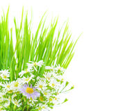 Σύνορα λουλουδιών της Daisy Στοκ Φωτογραφίες