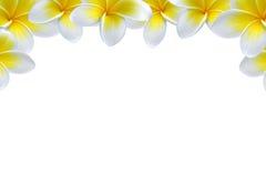 Σύνορα πλαισίων υποβάθρου λουλουδιών Στοκ φωτογραφίες με δικαίωμα ελεύθερης χρήσης