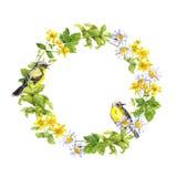 Σύνορα στεφανιών - λουλούδια άνοιξη, άγρια χορτάρια, χλόη Πλαίσιο κύκλων Watercolor Στοκ εικόνα με δικαίωμα ελεύθερης χρήσης