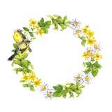 Σύνορα στεφανιών - δύο πουλιά Λουλούδια λιβαδιών, χλόη Πλαίσιο κύκλων Watercolor Στοκ Εικόνες