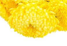 Σύνορα των κίτρινων λουλουδιών mum Στοκ Εικόνες