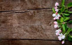 Σύνορα των λουλουδιών της Apple στο παλαιό ξύλινο υπόβαθρο Στοκ φωτογραφία με δικαίωμα ελεύθερης χρήσης