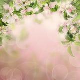 Σύνορα φύσης με τα λουλούδια της Apple και κλαδίσκοι με τα πράσινα φύλλα Στοκ Εικόνες