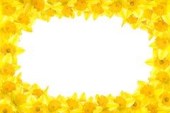 σύνορα daffodil διανυσματική απεικόνιση
