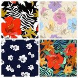Σύνολο άνευ ραφής floral υποβάθρων Άνευ ραφής floral σχέδιο με Στοκ Εικόνα