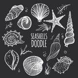 Σύνολο άσπρων θαλασσινών κοχυλιών στο μαύρο υπόβαθρο απεικόνιση αποθεμάτων