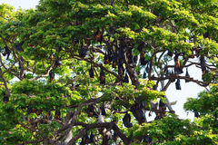 Σύνολο δέντρων των ροπάλων Στοκ φωτογραφία με δικαίωμα ελεύθερης χρήσης