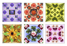 Σύνολο έξι floral τετραγώνων φιαγμένων από φυσικά λουλούδια Στοκ Εικόνες