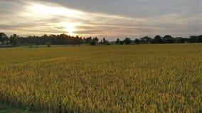 Σύνολο ήλιων πρασινάδων ήλιων τοπίου φύσης Στοκ Εικόνα